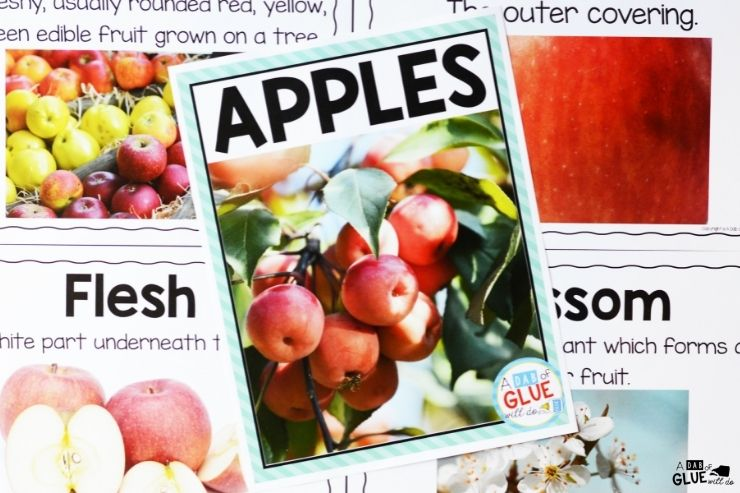 All about apples science unit for elementary kids