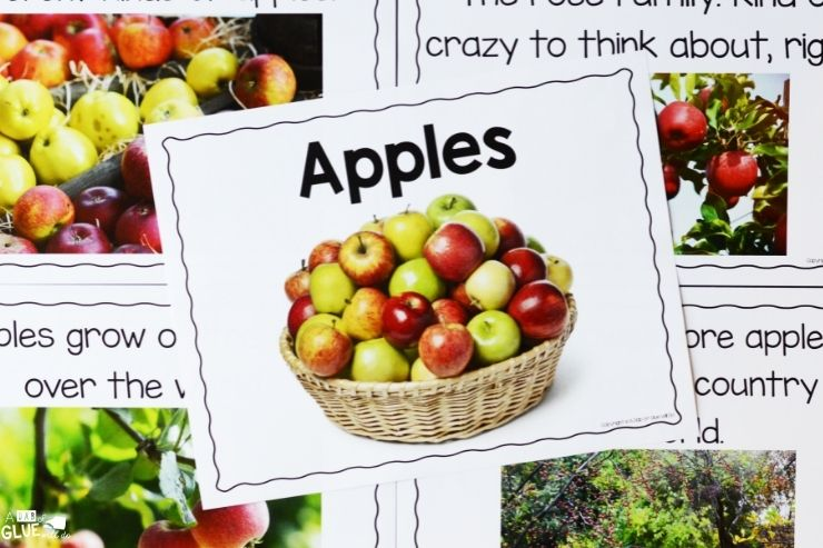 Apple definition posters to make this apple science unit engaging for students